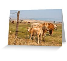 Interrupting Cows Greeting Card