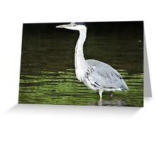 Looking For Fish Greeting Card