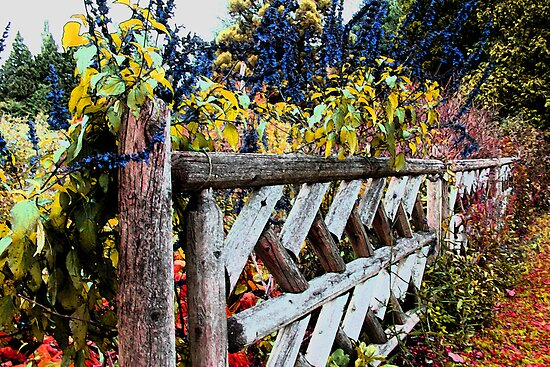 "Fence Posts by David ""Oz""  Osterczy"