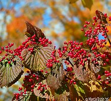 Bunches of Berries by Marcia Rubin