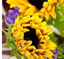 Hot Yellow Sunflower by doorfrontphotos