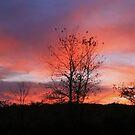 Sundown in Homer by Chelei