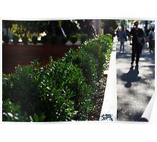Urban Greenery Poster