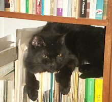 black cat on books by betsy8897
