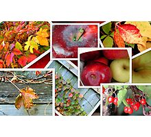 Autumn's Collage of Beauty ©  Photographic Print