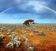 Desert Rainbow by Ben Goode