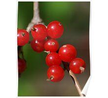 Beautiful Berries Poster