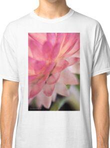 Straw Flower Macro Classic T-Shirt