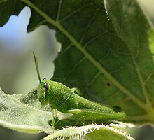 Green Hopper by RebeccaBlackman