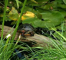 painted turtle on log by betsy8897