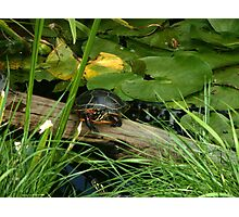 painted turtle on log Photographic Print