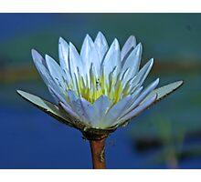 Delta lily Photographic Print