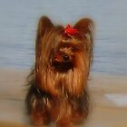 Our Yorkie Princess by Gail Bridger