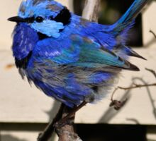 Blue Wren T'shirt Sticker