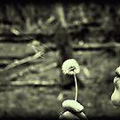 Make a wish by SimPhotography