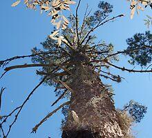 Tree trunk - Starkey Park, New Port Richey, FL by nataliedelnegro