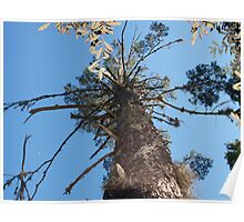 Tree trunk - Starkey Park, New Port Richey, FL Poster