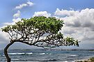 Waiehu Tree by DJ Florek