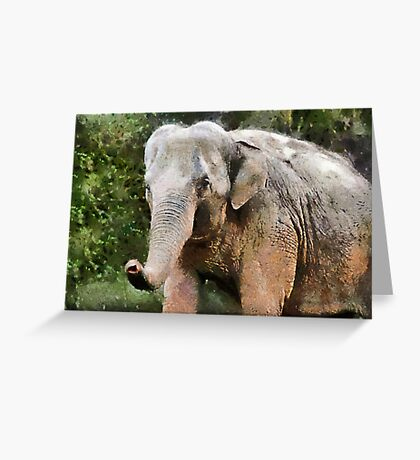 The Elephant, Paignton Zoo, UK Greeting Card