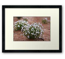 Outback Daisy Framed Print
