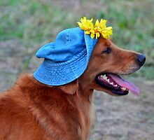 Smiling Golden Retriever in Hat by Catherine Sherman