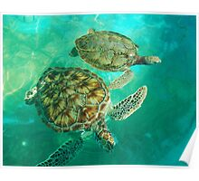Sea Turtle Swim Poster