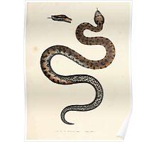 Leopold Joseph Fitzinger 1867 0151 Picture Atlas for popular scientific natural history of vertebrates Poster