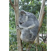 One Happy Koala Photographic Print