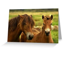Exmoor Pony with Foal Greeting Card