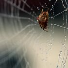Web by Lisa Milam
