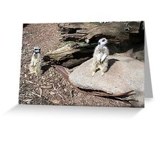 Meer Cats Greeting Card