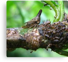 Mother Membracidae Treehopper & Nymph Canvas Print