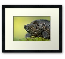 Baby Snapping Turtle close-up. Framed Print