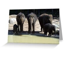 The Melbourne Zoo ~ Mali and Ongard Greeting Card