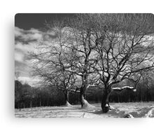 Winter trees in snow Canvas Print