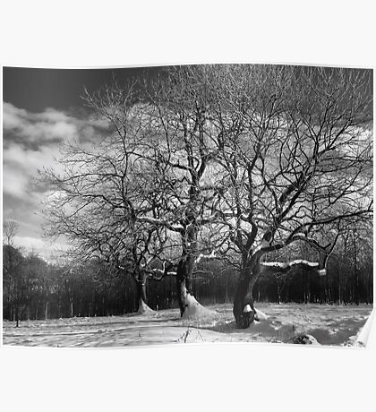 Winter trees in snow Poster