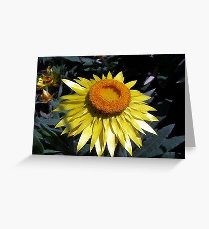 Flower Beam Greeting Card