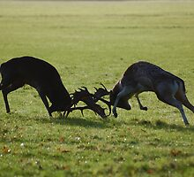 Fight Fight!! by Declan Carr
