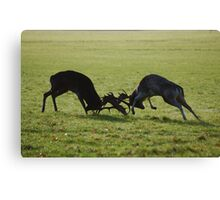 Fight Fight!! Canvas Print
