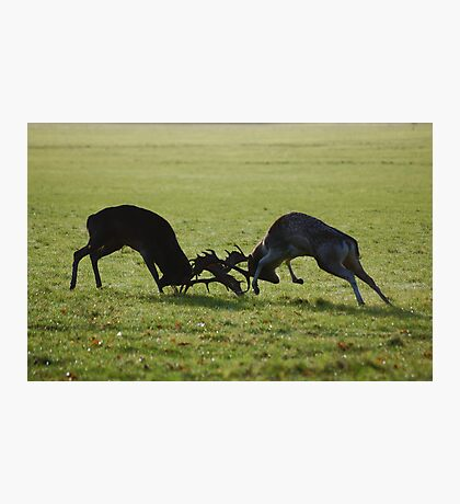 Fight Fight!! Photographic Print