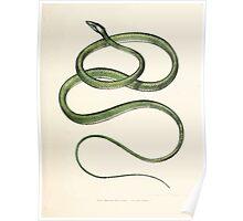 Leopold Joseph Fitzinger 1867 0127 Picture Atlas for popular scientific natural history of vertebrates Poster