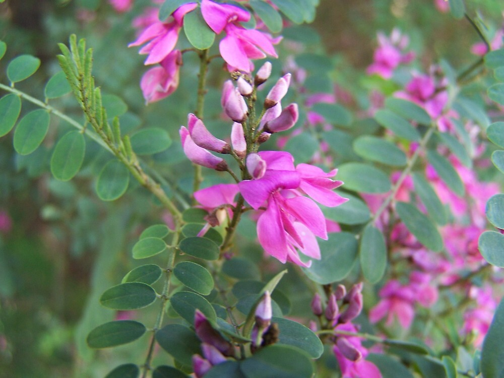 Flowers by wyvernsrose