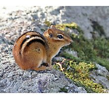 Chipmunk on the St. Lawrence Photographic Print