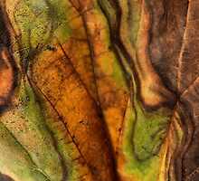 Nature's Art ~ The Changes of Color by Carla Jensen