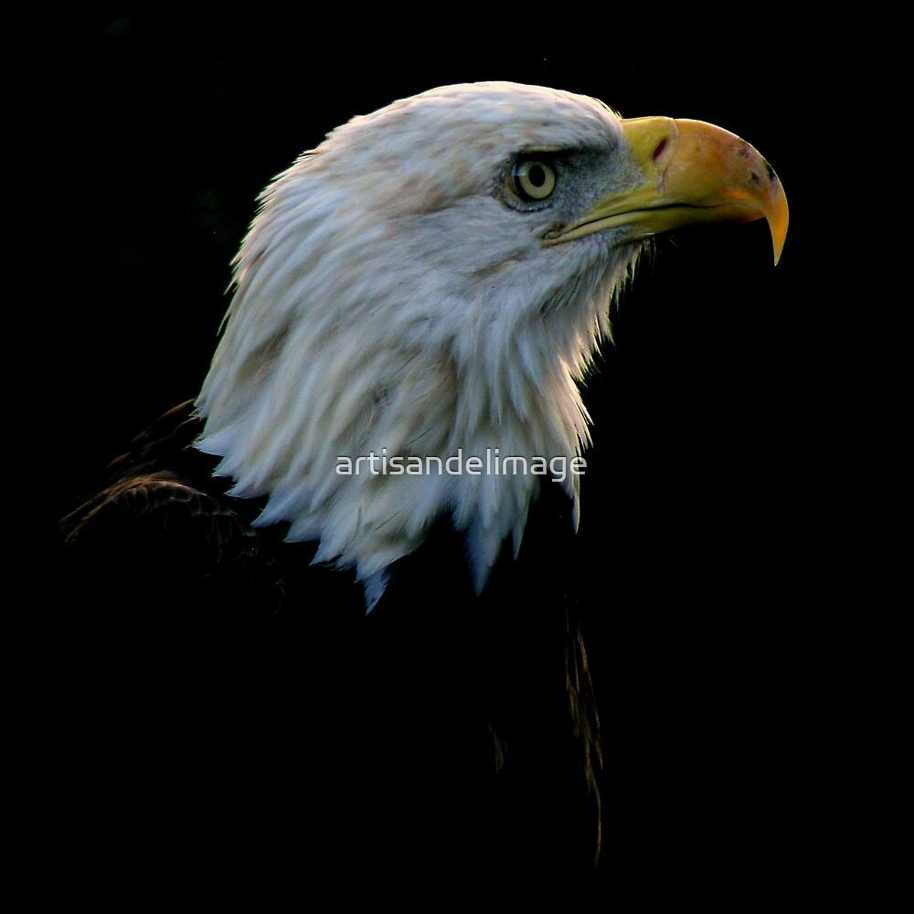 Avian Profile ~ Part 4 by artisandelimage