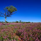 Field of Purple - Owen Springs, NT by Bart The Photographer