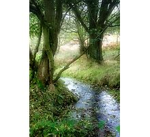 Autumn Stream Photographic Print