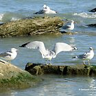 Seagulls Enjoying the Morning Sun by Barberelli