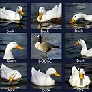 Duck, Duck, GOOSE by lynell