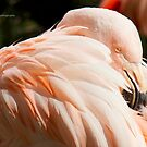 Pink Flamingo by Yannik Hay